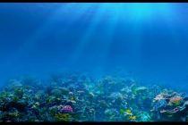 Selamat Untuk Pelestarian Ekosistem Laut dan Selamat Tinggal Ilegal Fishing!