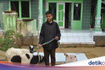 Siswa SD-SMP di Bandung Diberi Anak Ayam, di Purwakarta Dikasih Domba