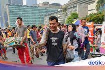 Warga Ini Bawa Ular Piton Burma ke CFD Bundaran HI
