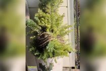 Penghuni Rumah Kaget Temukan Ular Piton 3 Meter di Pohon Natal