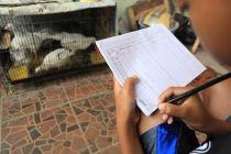 Program Pembagian Anak Ayam Mulai Menunjukan Hasil