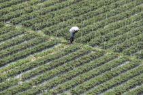Ini Alasan Indonesia Negara Agraris Tapi Masih Impor