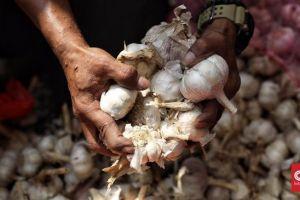 Cegah Virus Corona, Bali Setop Impor Bawang Putih dari China