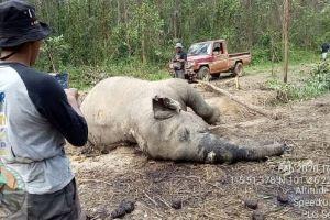 Lagi, Bang Gajah Liar ditemukan di Konsesi Perusahaan di Riau