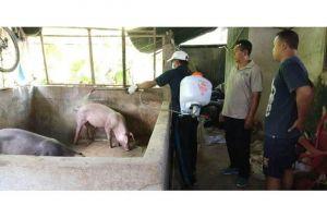 Pemda Bali dan Kementan Tangani Kasus Kematian Babi di Bali