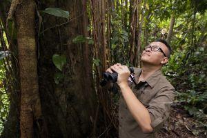Peneliti Rangkong Gading Indonesia Raih Whitley Award 2020