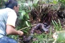 Seorang Warga Lubuklinggau saat Mau Mandi di Sungai Malah Temukan 2 Ular Piton