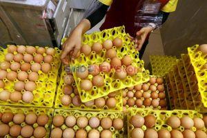 Harga Telur di Semarang Melonjak, 1 Kg Capai Rp24.000