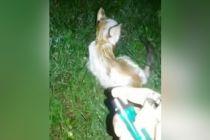 Anak Kucing Dibakar Hidup-hidup, Rp34,6 Juta untuk Buru Pelaku