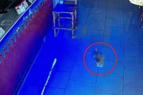 Viral! Video Anak Kucing Tertangkap Kamera Curi Segepok Uang