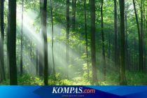 Pamit Cari Sagu, Dua Anak Perempuan Hilang di Dalam Hutan