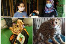 Anak Kucing Hutan Diselamatkan di Kediri, Datang dari Areal Sawah