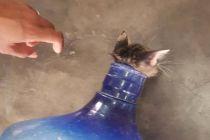 Sudin Gulkarmat Jakbar Selamatkan Anak Kucing Terjebak di Galon