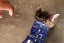 Empat Damkar Cengkareng Bantu Penyelamatan Anak Kucing Terjebak di Galon Air