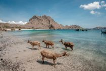 Badan Otorita Labuan Bajo Ungkap Zona Proyek Jurassic Park Pulau Rinca