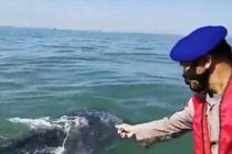 60 Hiu Tutul Muncul di Perairan Pasuruan, Warga Dilarang Mengganggu